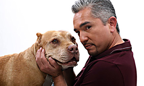 Cesar Millan showing one of his pit bulls who's in charge.