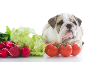 dog nutrition, fresh vegetables
