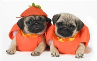 Pups as pumpkins