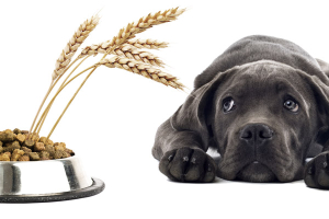 Do you know what kind of grains are in your dog's food?