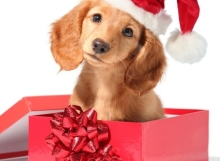A healthy puppy is the best kind of present!