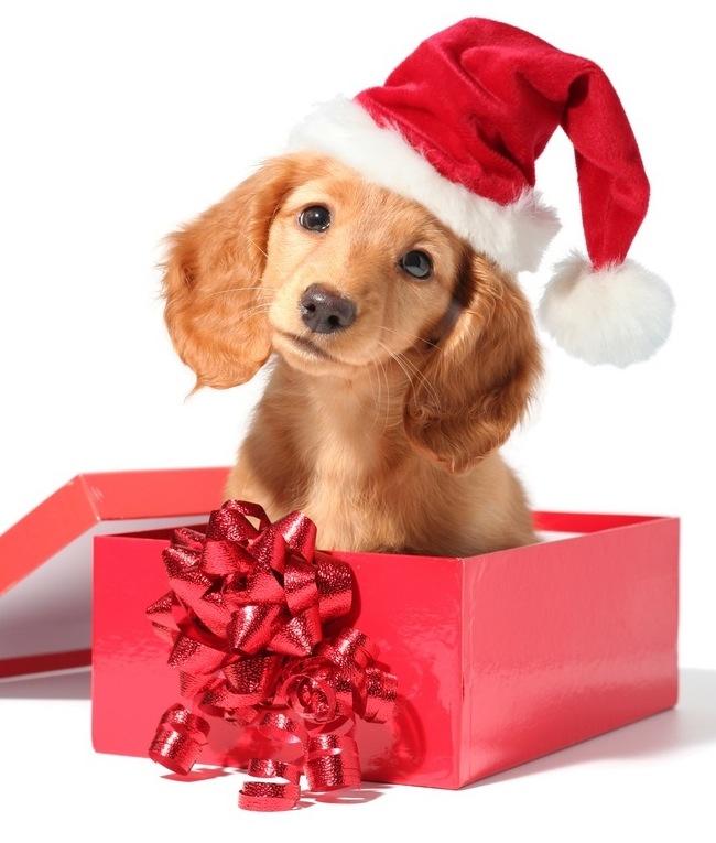 Christmas dog gift ideas