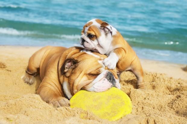 Want a healthier dog? Lucky Dog Cuisine can help!