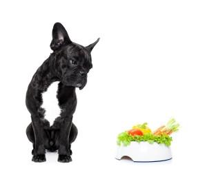 Dog and salad