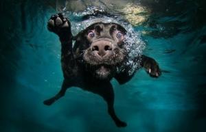 UnderwaterDogs3