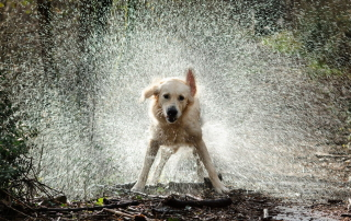 Someone knows how to stay cool!
