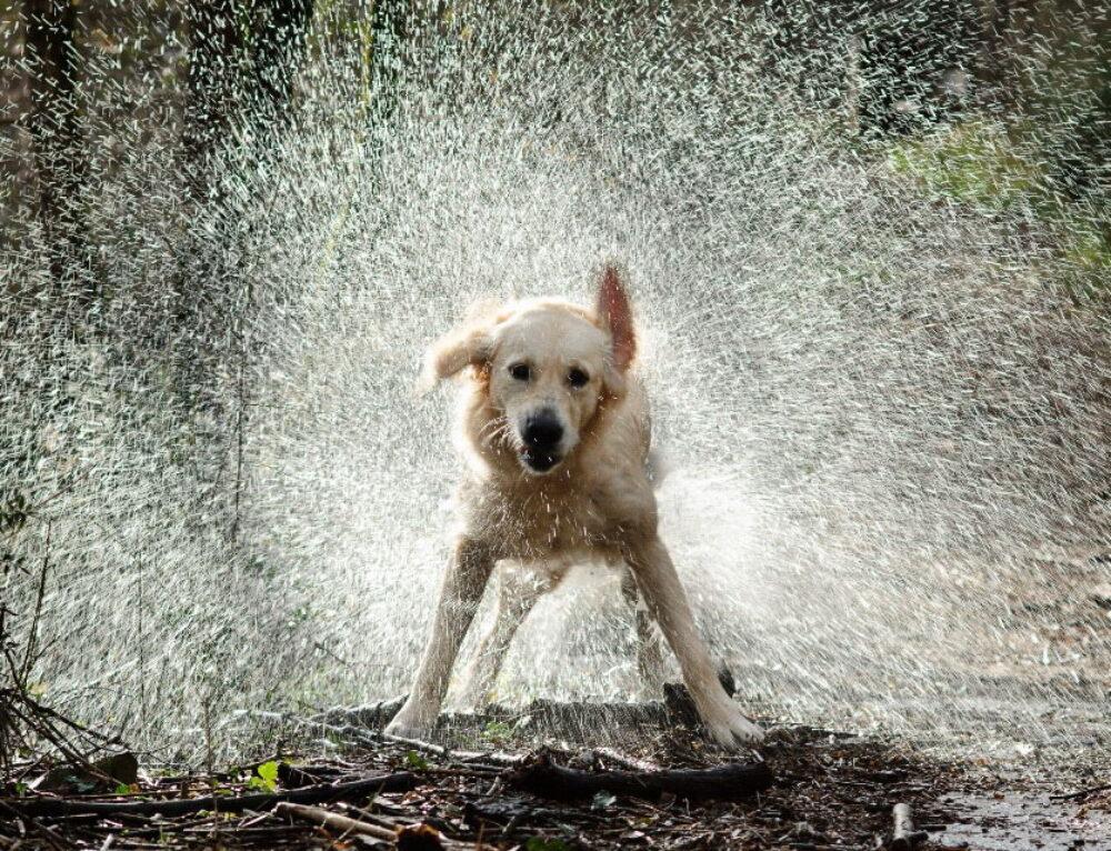 Heat Stroke in Dogs Part 2