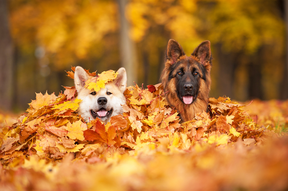 Keeping Your Dog Healthy Into Fall