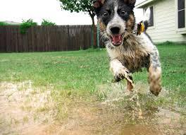 messy-dog